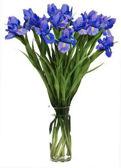 When Iris Eyes are Smiling (20 stems) - With Vase…