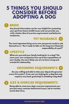 1000 images about dog infographics on pinterest safety tips dog names and safety. Black Bedroom Furniture Sets. Home Design Ideas