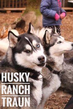 Ranch, Husky, Outdoor Activities, Wanderlust, Camping, Dogs, Travel, Animals, Dwarf