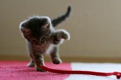格闘中の仔猫