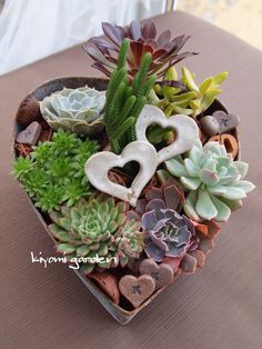 Succulents in a heart shaped garden dish. Tropical Floral Arrangements, Succulent Arrangements, Cacti And Succulents, Planting Succulents, Living Green Wall, Messy Bedroom, Succulents In Containers, Drought Tolerant Plants, Garden Landscape Design