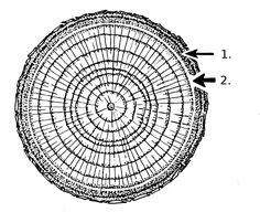 срез дерева дизайн - Поиск в Google