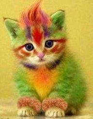 funny rainbow color kitten