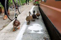 鴨鴨專屬《鴨行道》不是鴨鴨不能通過唷(誤)