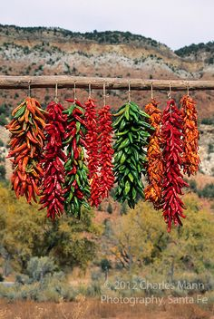 Colorful chile ristras hang out to dry in the autumn sun of New Mexico photo by Charles Mann