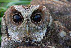 #lovely #owl