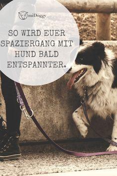 Die 26 Besten Bilder Von Urin Entfernen Doggies Cleaning Und