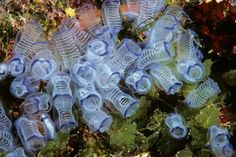Image Gallery: Catalogue of Strange Sea Creatures