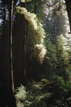Dirty Hippies Productions — Fact Of The Day - Each tree can absorb 4.8 pounds...