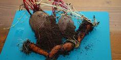 Aj v teplej pivnici môže zostať zelenina svieža