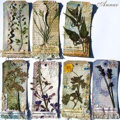 mini herbarium by Annar33, via Flickr