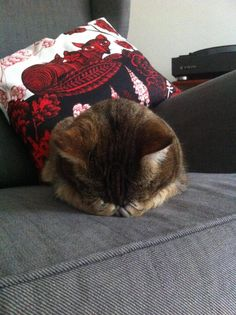 """Who needs a pillow? Not this sleepy pussy cat... Talk about """"bed head""""!"""