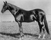 Fonso | Winner of the 6th Kentucky Derby | 1880 | Jockey: G. Lewis | 5-Horse Field | $3,800 prize