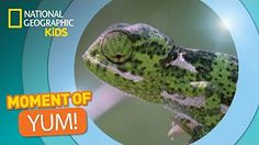 National Geographic Kids - YouTube