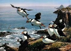Cleared For LandingAtlantic puffins11.5 x 16 artist  Cynthie Fisher