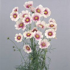 Cut Flower Garden, Flower Farm, Potager Garden, Garden Plants, Flowers For Everyone, Outdoor Plants, Cut Flowers, Flower Photos, Watercolor Flowers