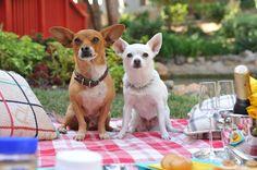 GIVEAWAY: Beverly Hills Chihuahua 3 Viva La Fiesta!