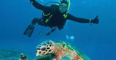 Nono país mais pacífico do mundo: Austrália. O território australiano está cheio de bichos assustadores, mas é um lugar seguro tanto dentro de suas metrópoles como em suas atrações naturais. Na foto, turista se depara com uma tartaruga-marinha durante mergulho na região da Grande Barreira de Corais