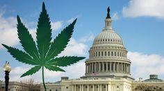 #legalizemarijuana #legalize #cannabis #cannabiscommunity #weed
