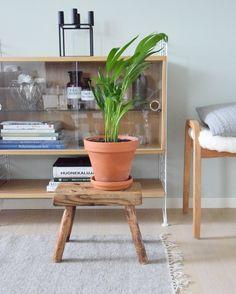 Desk, Aurora, Greenery, Table, Furniture, Garden, Flowers, Home Decor, Living Room