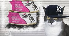 Hi! I'm DJCK for Nulo Freestyle and I'm gonna do some freestyle rappin' for y'all! My boi Tuna R'son Kitty will be laying down da beats. #ChewyInfluencer #sponsored