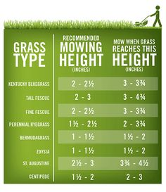 Proper mowing not only leads to an attractive lawn, but also increases the density of your grass, ensuring that it stays healthy and vibrant.