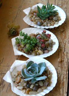 homework: creative inspiration for home and life: The Dirt: little shells and succulents