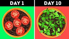GARDEN IDEAS YOU SHOULD TRY Gardening season has started recently and we prepared a selection of ideas on how to grow different plants without an effort! Regrow Vegetables, Growing Vegetables, Veggies, Veg Garden, Edible Garden, Gravel Garden, Garden Soil, Easy Garden, Container Gardening