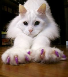 Soft Paws are the safe and humane alternative to declawing developed by a veterinarian. Soft Paws nail caps are easy to apply and will fall off in about weeks with the natural shedding of your cats claws. Soft Paws will need to be replaced at that tim Animals Beautiful, Cute Animals, Cat Facts, White Cats, Cute Creatures, Crazy Cats, Cats And Kittens, Kitty Cats, Animal Pictures