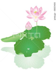蓮の花と水玉