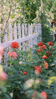 Iphone Wallpaper Sky, Flower Phone Wallpaper, Tumblr Wallpaper, Photo Wallpaper, Wallpaper Nature Flowers, Flower Backgrounds, Flowers Nature, Aesthetic Backgrounds, Aesthetic Wallpapers
