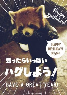 Happy Birthday Animals, Birthday Wishes, Birthday Photos, Best Friends, Creatures, Angel, Wallpapers, Gardening, Entertaining