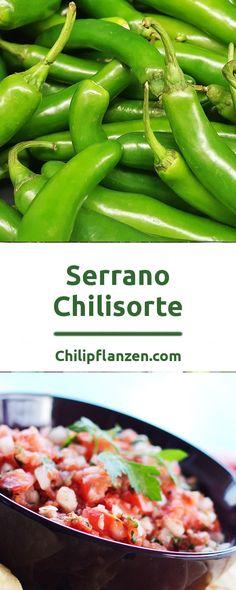 Serrano ist eine Chilisorte, die nach den Bergen um Puebla im mexikanischen Bundesland Hidalgo benannt ist. Dort geht das subtropische Klima in eine Steppenlandschaft über. Auf den rötlichen Bergen wachsen Palmen wie Kakteen. Dem warmen Klima und den in manchen Monaten geringen Niederschlag hat sich die Pflanze ideal angepasst. Serranos sehen aus wie kleine Jalapeños. Hottest Chili Pepper, Some Like It Hot, Tamales, Stuffed Hot Peppers, Bergen, Green Beans, Casserole, Chilis, Vegetables