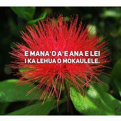 """A wish to wear the lehua of Mokaulele in a lei."" (p. 43-352) _______ A wish to win the maiden. Lei symbolizes sweetheart, and lehua, a pretty girl. #lehua #flower #nature #olelonoeau #poetry #quotes #hawaii #oahu #maui #kauai"