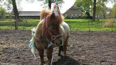 #Milou Mentink   Happy birthday!