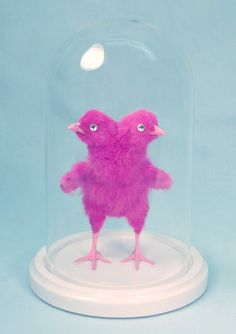 PIMPED PEEP pink twoheaded chick rogue taxidermy by CustomCreature, $450.00