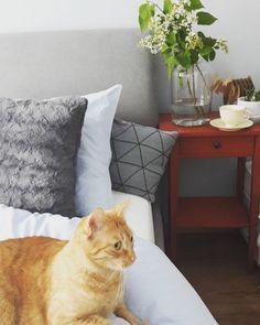 Good morning #l4l #instagood #cat #gatto #gattorosso #redcat #polishcat #mrau #bedroom #scandibedroom #decoration #homesweethome #sundaymorning #sunday #coffeetime  #lilac #whitelilac #decoration #inspiration #ikea #pepco #jysk @misspaper_x dziękuję za łosia
