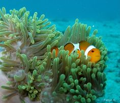 Photo sous-marine, Ko Lanta, Thailande                              …