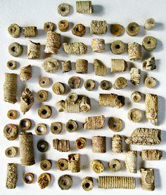 Crinoid Fossils 74 Pieces in Specimen Jar by #BarrenRiverEmporium