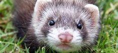 Image result for animals in australia