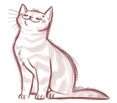 059: American Shorthair Sketch #cat