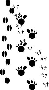 Footprints clip art - vector clip art online, royalty free & public domain