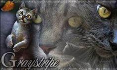 Graystripe image mashup - Warrior Cats Book Series Photo (36790531 ...