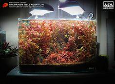 """Red is the New Green"", a Danish Style Aquarium - by Marie-Sophie Germain - www.mariesophiegermain.net - www.danish-style-aquarium.com"