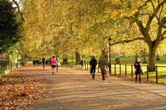 Take a walk in one of London's Royal Parks - jog on down!