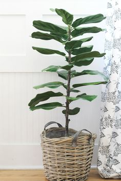 Don't have a green thumb? This faux fiddle tree looks and feels like the real deal!