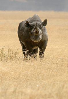 Hi, I'm coming...!! | Flickr - Photo Sharing!