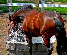 Splish, splash I was takin' a bath...