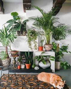 Today's home tour with Manon Hanssen in a  former spice warehouse from 1636 is without a doubt one of my favorite spaces we've ever had the honor of sharing on DS. Check out Manon and her beautiful family's amazing Amsterdam home in the profile link above. This space is so, so special. ❤ Photos by @thecitysupper #home #design #interiors #amsterdam #decorating #plants #urbanjunglebloggers