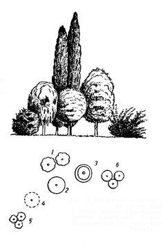 Рис. 21. Группа разновысотных деревьев с кронами разной формы: 1 — тополь черный пирамидальный; 2 — клен остролистный шаровидный; 3 — вяз гладкий; 4 — ива белая плакучая; 5 — сирень обыкновенная; 6 — клен Гиннала